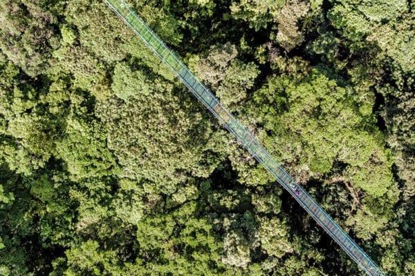 Treetop-Walkways-Selvatura-Park-2