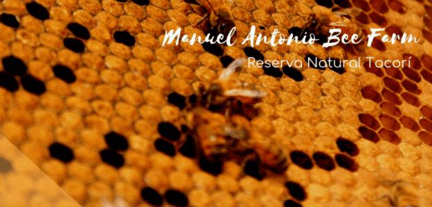 Manuel Antonio Bee Farm & Apinatura Products
