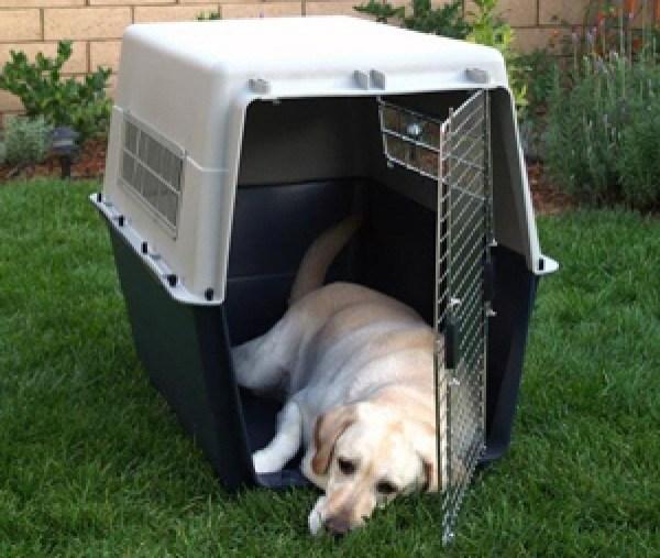 Pet Transfers