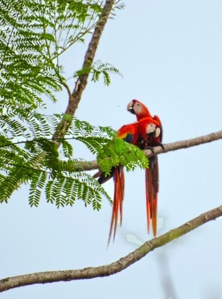 Birdwatching Tour