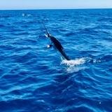 El Jefe Sport Fishing