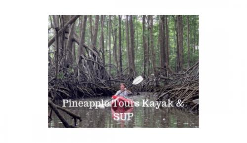 Pineapple Tours Kayak & SUP