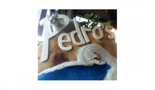 Pedro's Surf Shop