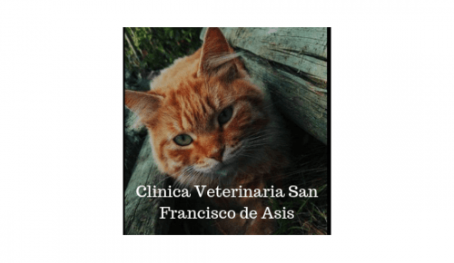 Clinica Veterinaria San Franci