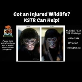 KSTR - Emergency Wildlife Center