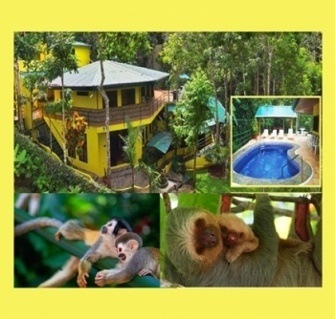 Jungle Creek Vacation Rentals