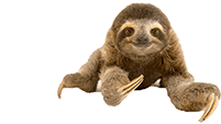 Powered by Ask Zipy